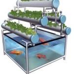 Budidaya Ikan dan Sayuran Dengan Sistem Akuaponik ala Yusuf Randi, Pemilik Randi Farm