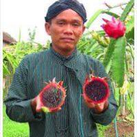 Kusumaningrat, Pembudidaya Buah Naga Hitam Organik ~ Sebulan Panen Bisa Sampai 20 ton